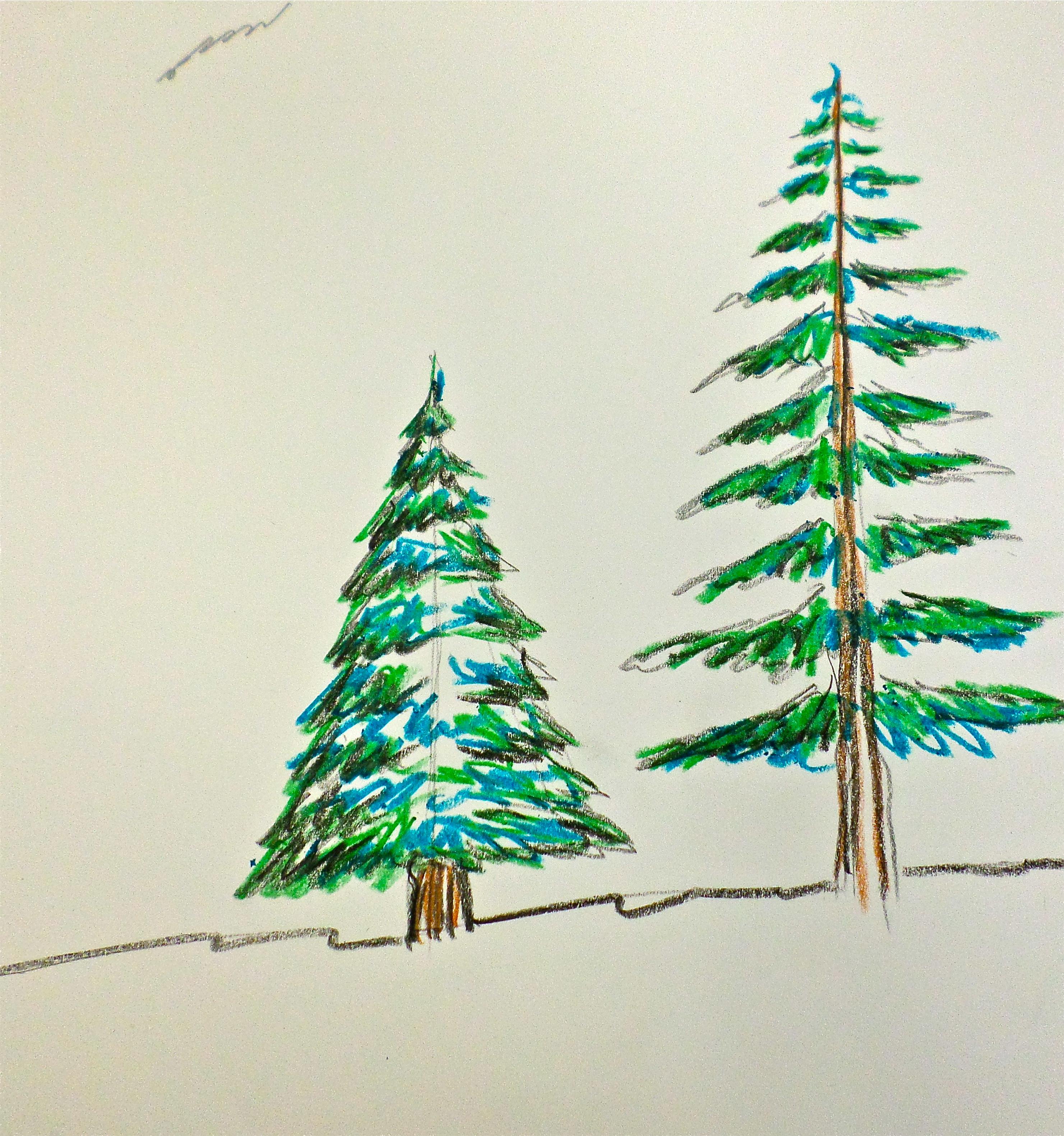 evergreen trees   Artmanews!